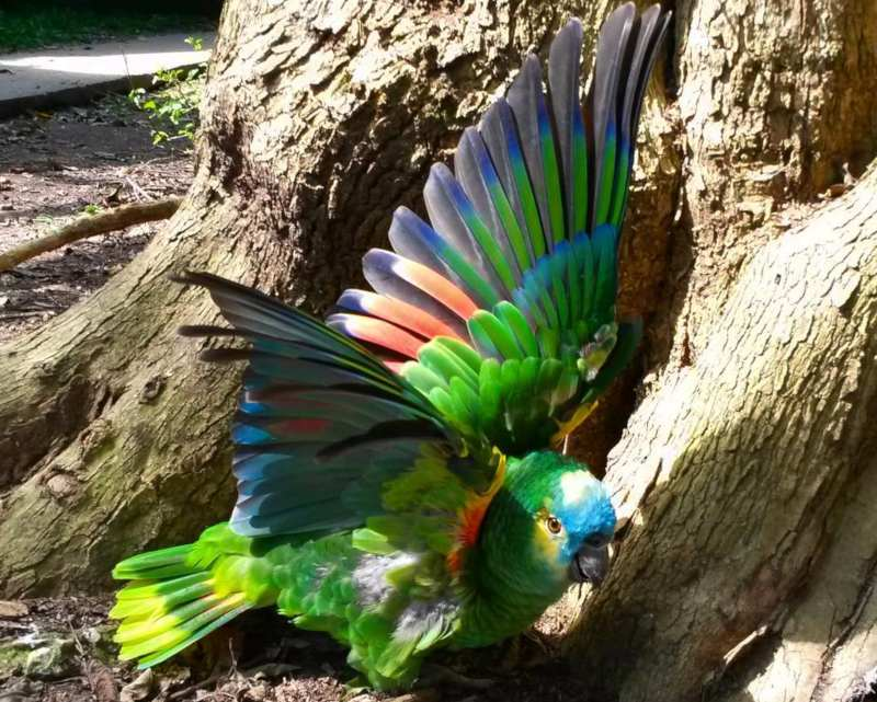 Colourful creature - Birds of Eden - Things to do in Plettenberg Bay